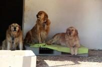 HAYVAN - 'Golden Çetesi'ne Belediye El Koydu