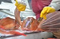 KIRLANGIÇ - Kırlangıç Balığı Tezgahları Süslüyor