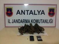 UYUŞTURUCU TİCARETİ - Manavgat'ta Esrar Ele Geçirildi