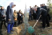 GÖNÜL ELÇİLERİ - Mardin'de 'Bereket Ormanlarına' Fidan Dikildi