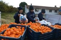 SOSYAL BELEDİYECİLİK - Söke Belediyesi'nden Vatandaşa C Vitamini