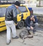 KÖPEK - Tavuklarına Saldırdığı İddiasıyla Köpeği Tüfekle Vurarak Öldürdü