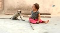 AMATÖR - Maymun Sadece Oynamak İstedi Ama...