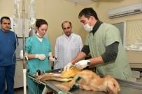 HAYVAN BAKIM EVİ - Sokak Hayvanlarına Yıldırım Belediyesi Şefkati