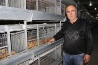 YUMURTA - Üreticide Viyolü 6 Lira Olan Yumurta Marketlerde 12 İla 20 Lira Arasında Satılıyor