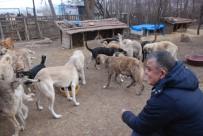 YENIYURT - 100'E Yakın Köpeğe Bakan Hayvansevere Destek