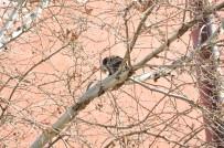 İTFAİYE ERİ - Ağaçta Mahsur Kalan Kediyi İtfaiye Kurtardı