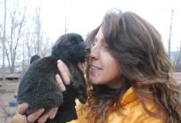 YENIYURT - Bahçesinde 100'E Yakın Köpeğe Bakan Hayvansevere Destek