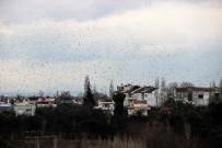SIĞIRCIK - Binlerce Kuş Gökyüzünü Kapladı