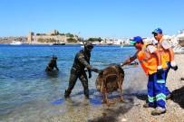 GÜVERCINLIK - Deniz Dibi Temizlik Kampanyası Başlıyor