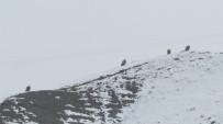 Kızıl Akbabalar İçin Doğaya Foto Kapan Bırakıldı