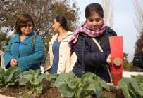 KARNABAHAR - Buca'nın Engelsiz Hobi Bahçelerinde Hasat Zamanı