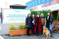 HAYVAN BAKIM EVİ - Girne Belediyesi, Beylikdüzü Modelini Örnek Almak İçin İlçeye Geldi