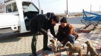 SOKAK KÖPEKLERİ - Kırkağaç'ta Sahipsiz Köpeklere Sağlık Kontrolü