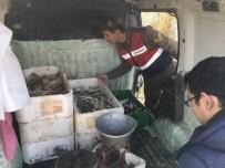 MENDERES NEHRİ - Söke'de İç Sularda Yasak Balık Avıyla Mücadele Sürüyor