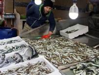 BARBUNYA - Hamsi diğer balıkların fiyatını da yükseltiyor
