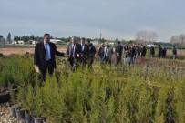 EROZYON - Mersin Orman Bölge Müdürlüğü Fidanlıkları, Belediyelere De Fidan Desteği Verecek