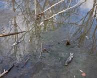 ÖLÜ BALIK - Balık Ölümlerinin Devam Etmesi Endişeyi Arttırıyor