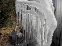 Milas'ta Bitkiler Buz Kütlesine Döndü
