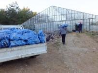 GEBIZ - Seralara Kamyon Kamyon Kömür Taşıyorlar