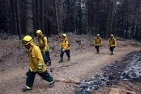 ORMAN YANGINI - Şili'de Orman Yangınında Ölü Sayısı 11'E Yükseldi