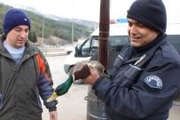 EZİLME TEHLİKESİ - Yaralı Ördeğe Polis Şefkati