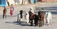 MUSTAFA YıLMAZ - En Küçük Çoban