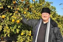 MEHMET ÖZÇELIK - Dalında Kalan Tonlarca Mandalina Çürüdü, Üretici Perişan