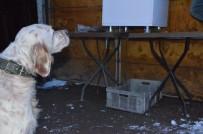 HAYVAN SEVGİSİ - Köpeği Aç Kalmasın Diye Zaman Ayarlı Makine Yaptı