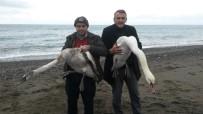 ORMAN İŞLETME MÜDÜRÜ - Yaralı Kuğular Tedavi Altına Alındı