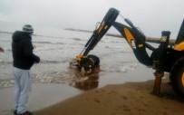 Cide Sahiline Ölü İnek Vurdu