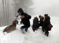 HAYVAN HAKLARı - Karda Sokak Hayvanlarına Sıcak Yardım Eli