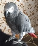 Kaybolan Papağanı Bulana Para Ödülü