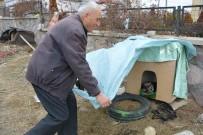 SOKAK KÖPEĞİ - Uşaklı Emekli Öğretmen 'Yemek Çöpe Gitmesin' Çağrısı