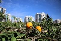 KAÇAK YAPILAŞMA - Adana'da 200 Bin Hektar Tarımsal Alan Tehdit Altında