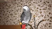 Başına Ödül Konulan Papağan Bulundu