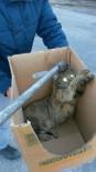 ZEYTINLI - Derede Mahsur Kalan Kediyi İtfaiye Kurtardı