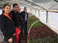 Milas Belediyesi Kendi Çiçeklerini Yetiştiriyor