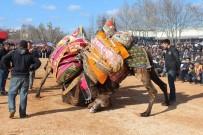 ÇıNARLıK - Yılın En Büyük Deve Güreşi, 5 Şubat'ta Biga'da