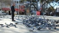 Burhaniye'de Güvercin Sevenlerin Sayısı Arttı