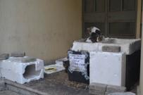 HAYVAN SEVERLER - Duyarlı Vatandaşlardan Kedi Yuvası