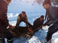 Firar Eden İthal Sığırlar, 3 Gün Sonra Uyuşturucu İğne İle Yakalandı