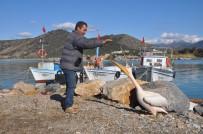 PELIKAN - 'Pelikan Abbas' Gazipaşa Limanı'nın Maskotu Oldu