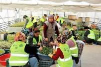 Zonguldak'ta 2.5 Milyon Fidan Toprakla Buluşuyor