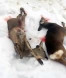 2 Yavru Karaca Avcılar Tarafından Katledildi