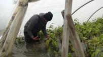 SEL FELAKETİ - Mersinli Çiftçilerin Seralarda Tekne Ve Kayıkla İmtihanı