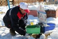 Çankırı'da Sokak Hayvanları Aç Ve Susuz Kalmıyor