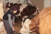 SOSYAL BILGILER - Çemişgezekli Ayşenur Türkiye 3'Üncüsü Oldu
