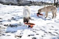 MAMAK BELEDIYESI - Şefkat Eli Sokak Hayvanlarına Da Uzanıyor