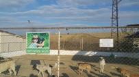 YENIÇIFTLIK - Sokak Hayvanlarına Özel İlgi